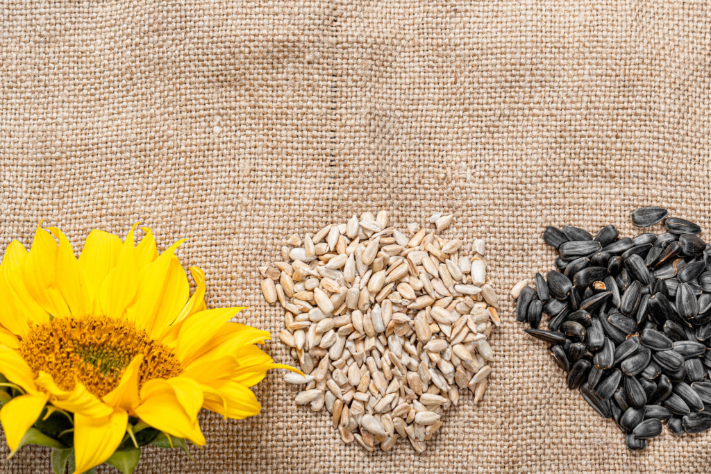 sunflower, flower, seeds, sunflower seeds, burlap
